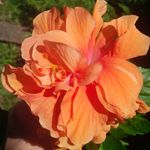 IMG_20150815_131641_edit.jpg