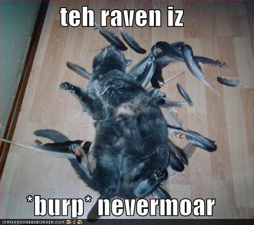 lolcat-lols-basement-cat-humor-fnord-lolmeme.jpg