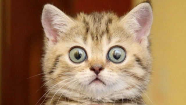 scared_kitten_ (1).jpg