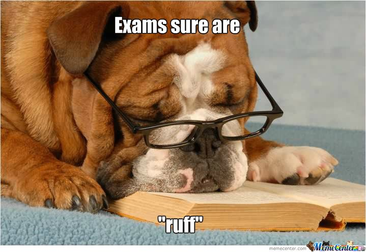 even-my-dog-hates-exams_o_1640793.jpg