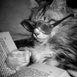 book cat.jpg