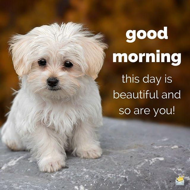 good morning puppy.jpg