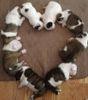 puppies hearts.JPG