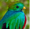 quetzalina