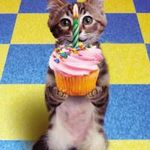 kitten_cupcakeSM.jpg