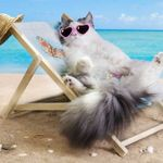 cat-beach-lounge-chair2