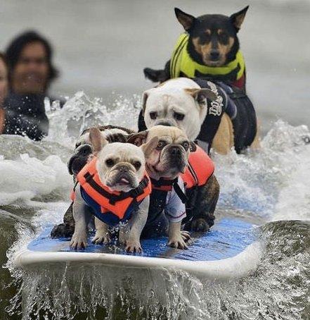 surf-dog.jpg