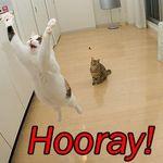 cat_saying_hooray.jpg