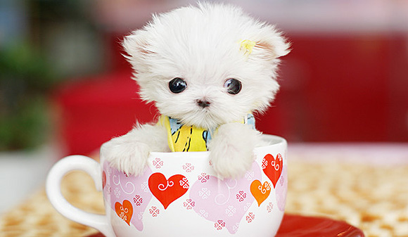 cute-puppy-l1.jpg