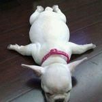 Puppy-Planking-l.jpg