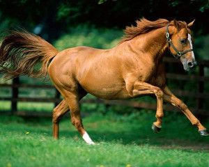 wallpapers-horses.jpg