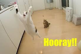 jumpingcat.jpg