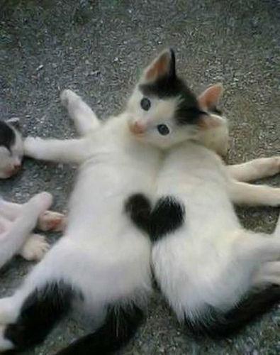 catheart1.jpg