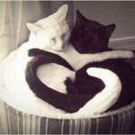catheart2.jpg