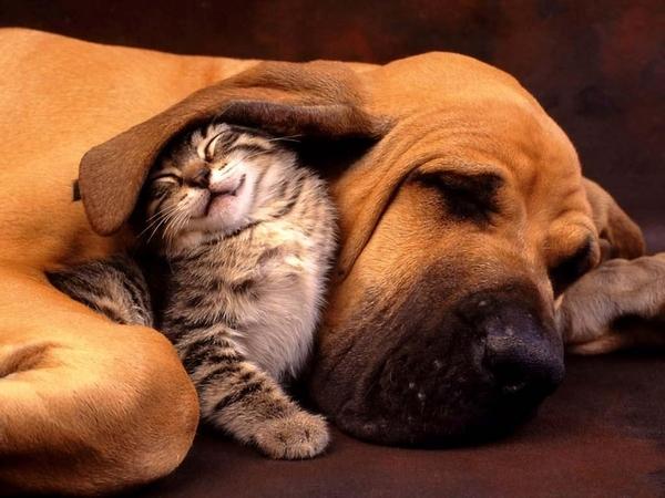 ear-snugglin-cat.jpg