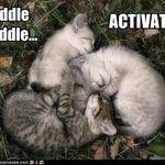 cuddlepuddle.jpg