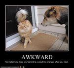 AwkwardLolcats1.jpg