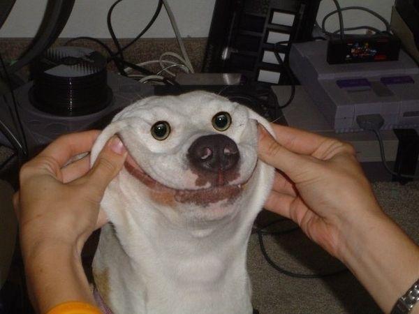smiling-dog-21283-1303501696-2.jpg