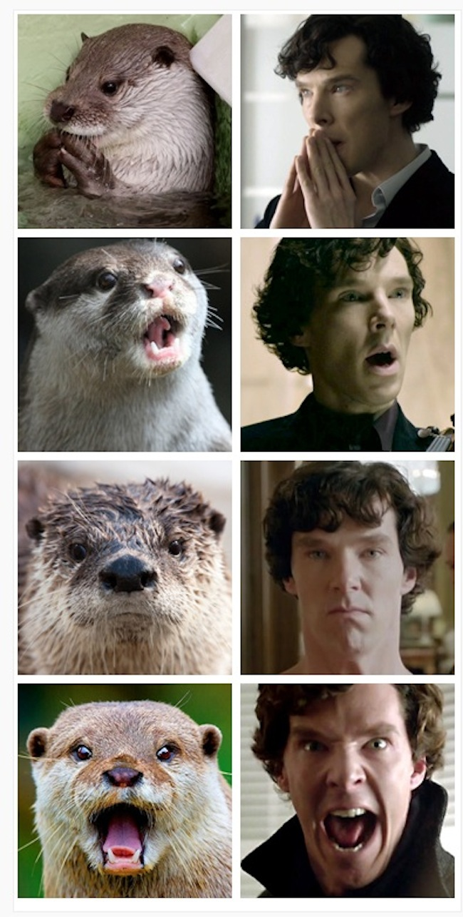 Otters-Who-Look-Like-Benedict-Cumberbatch1.jpg
