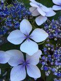 blueviolet21