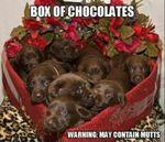 box of puppies.JPG