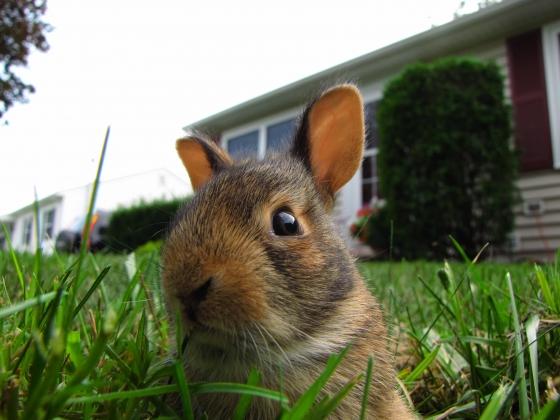 bunny!.jpg