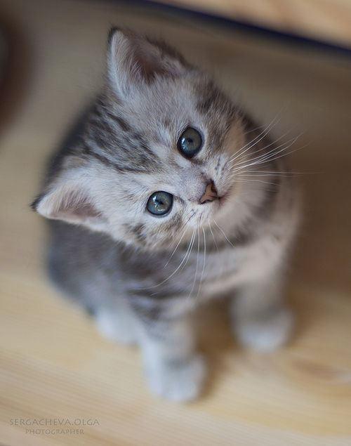 kitty-cat-3.jpg