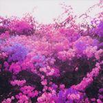 radiant-orchid-10.jpg