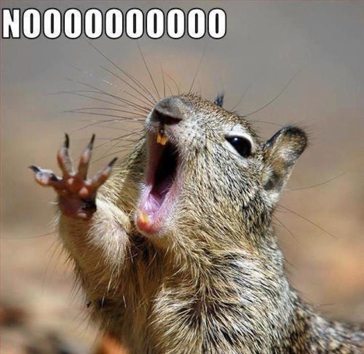squirrel-meme3.jpg