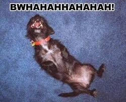 dog rolling on floor.jpg