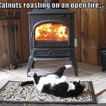 cat-roasts-by-fire.jpg