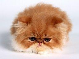 cranky-kitten.jpg