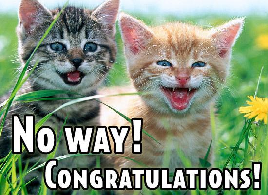 cat congrats.jpg