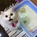 cat-poop.jpg