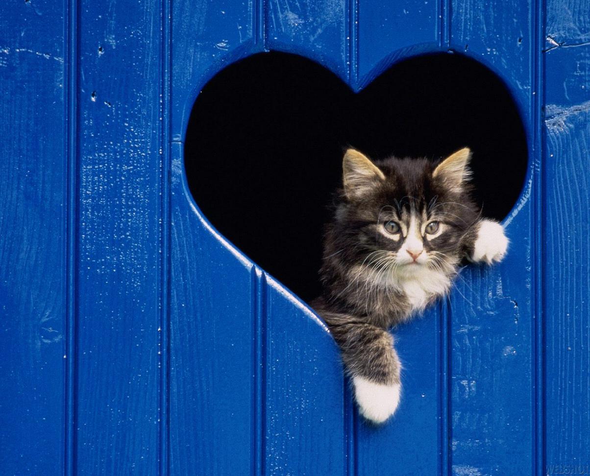 kitty-fence-blue-heart.jpg