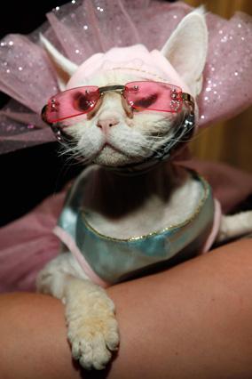201108-orig-algonquin-cat-show-3-284x426.jpg