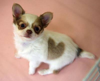 puppy_heart_1sm.jpg