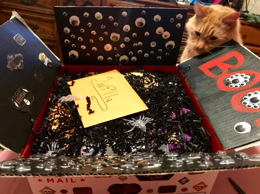 When I first opened the box... notice that Max the cat is stalking the box... he wouldn't leave it alone!!!