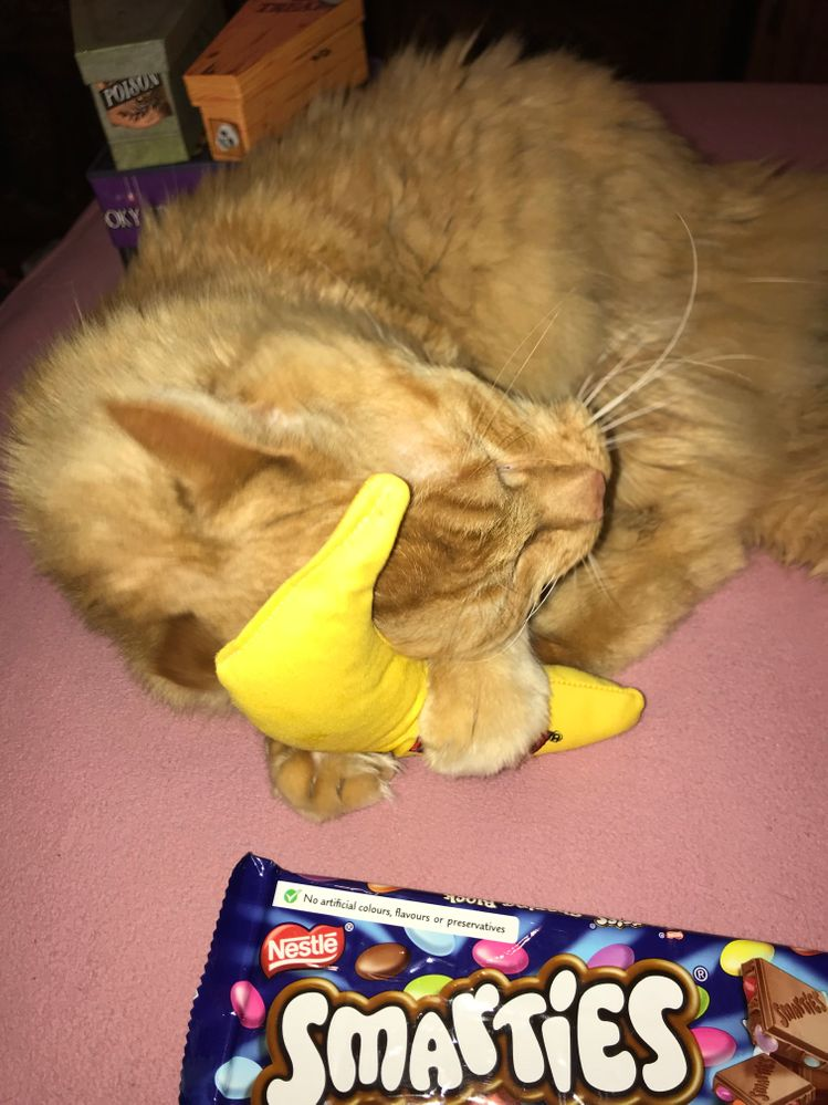 Last but not least, here is Max enjoying his new toy. Now you know why he was stalking the box. Catnip is potent!!!