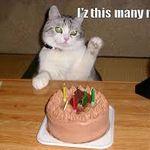 cat bday.jpg