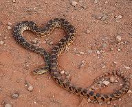snake heart.jpg