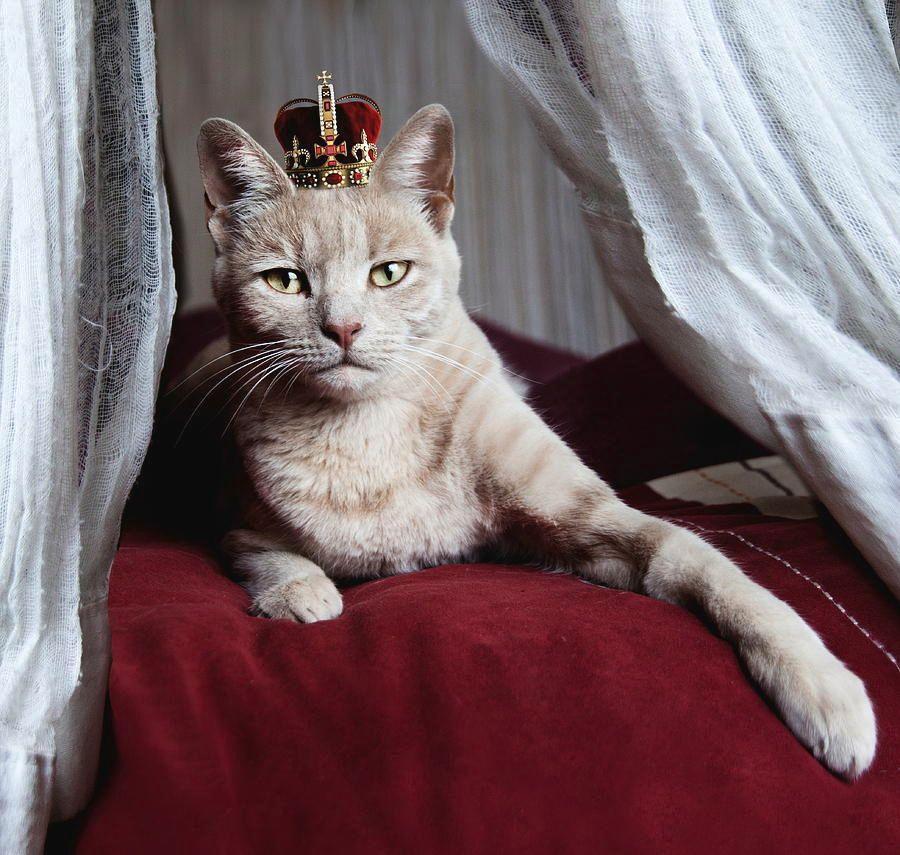 portrait-of-white-cat-with-crown-on-head-by-sigi-kolbe.jpg