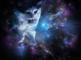 catinspac.jpg