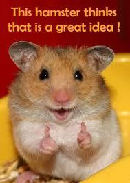 hamsteridea.jpg